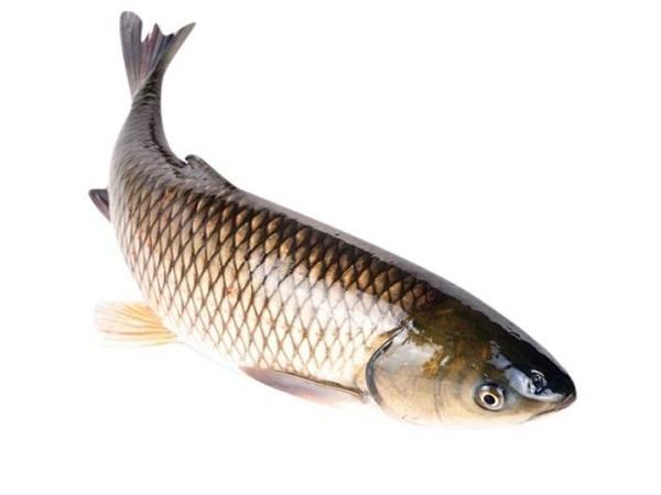 Mơ thấy cá trắm báo hiệu điều gì?
