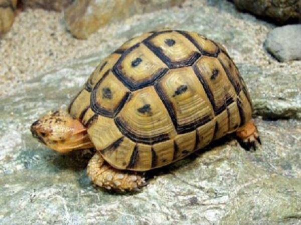 Mơ thấy rùa có điềm báo gì? Đánh con số nào may mắn?