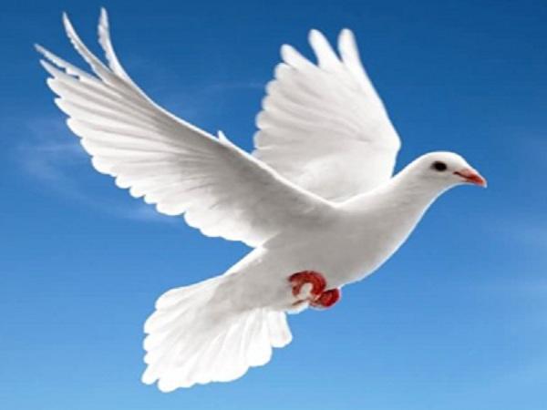 Mơ thấy con chim có điềm báo gì? Đánh lô đề số nào