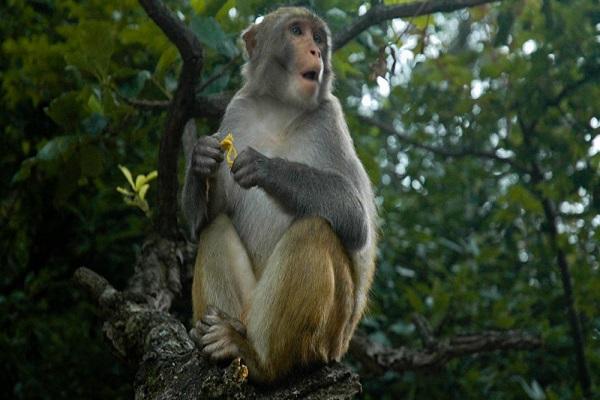 Điềm báo trong giấc mơ thấy khỉ