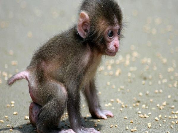 Tại sao lại mơ thấy con khỉ