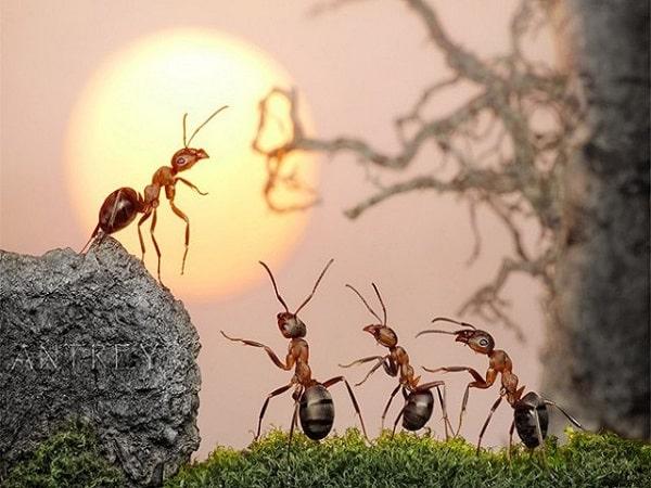 Lý giải điềm báo mơ thấy con kiến