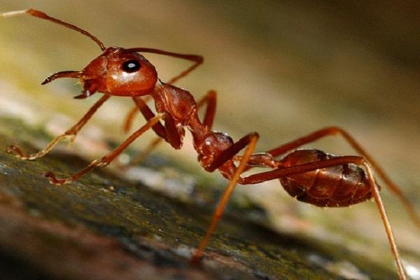 Điềm báo trong giấc mơ thấy con kiến