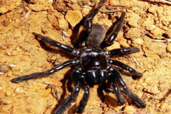 Điềm báo trong giấc mơ thấy con nhện