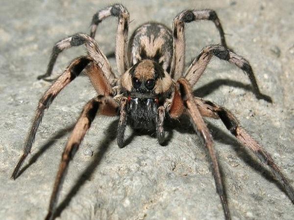 Vì sao lại mơ thấy con nhện