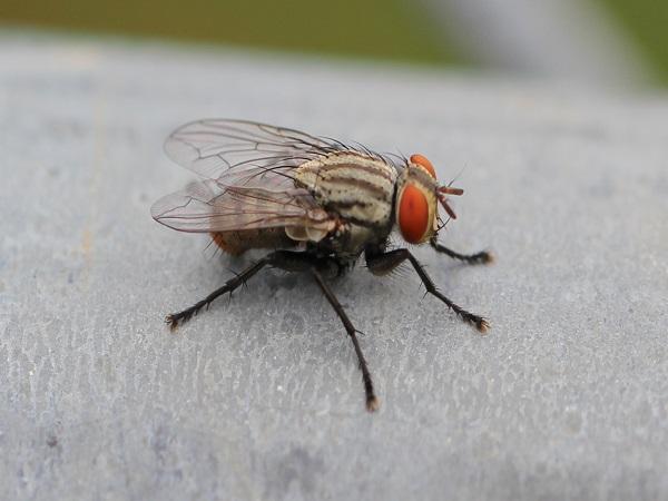 Tại sao lại mơ thấy con ruồi