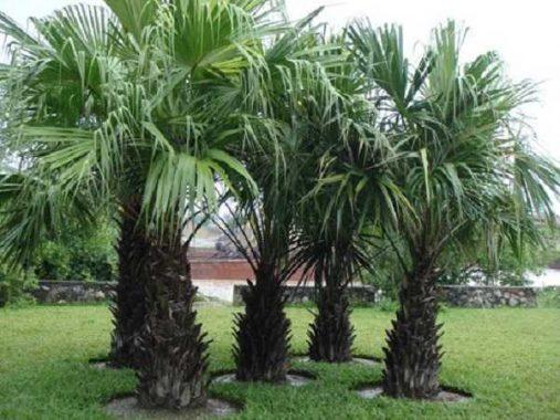 Mơ thấy cây dừa đánh kqxsmb chắc trúng