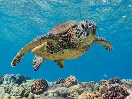 Nằm mơ thấy Rùa có ý nghĩa gì? Đánh con gì chuẩn nhất