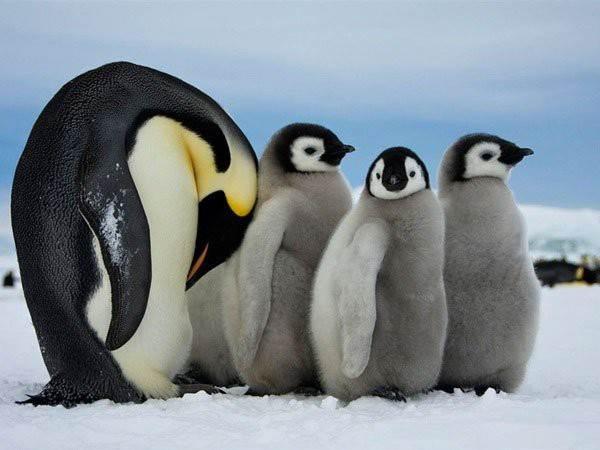 Mơ thấy chim cánh cụt là điềm báo điều gì?