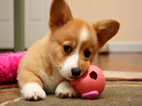 Nằm mơ thấy chó - Giải mã điềm báo giấc mơ thấy chó đánh con gì