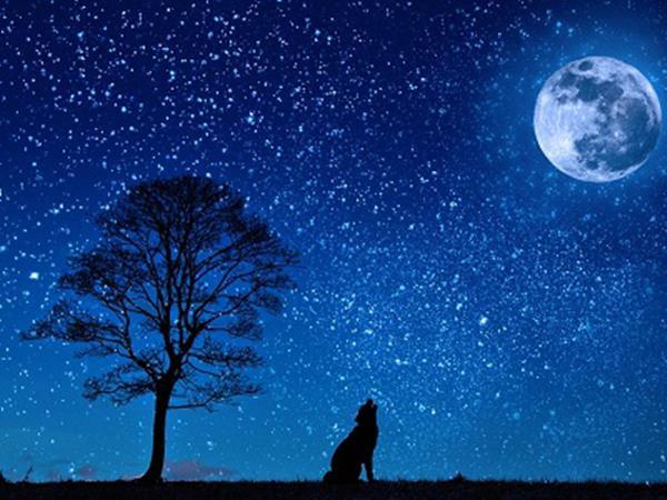 Mơ thấy ngôi sao là điềm gì? Làm giàu không khó với con số nào?