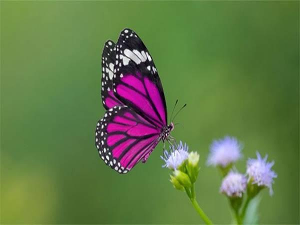 mơ thấy bươm bướm có điềm báo gì? đánh lô đề số nào