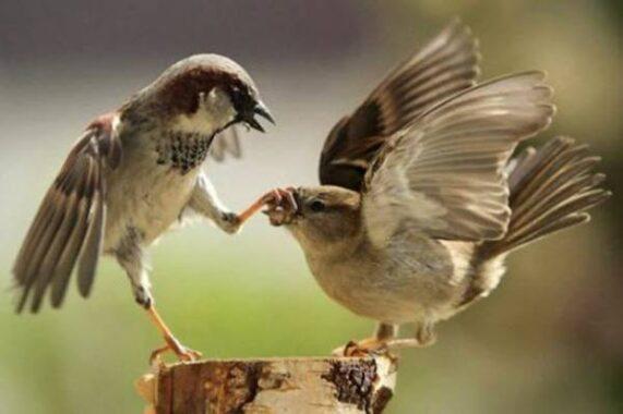 Giải mã nằm mơ thấy chim sẻ là điềm báo gì? nên đánh số mấy