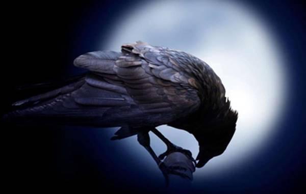 Nằm mơ thấy quạ đen là điềm báo gì? đánh lô đề số mấy