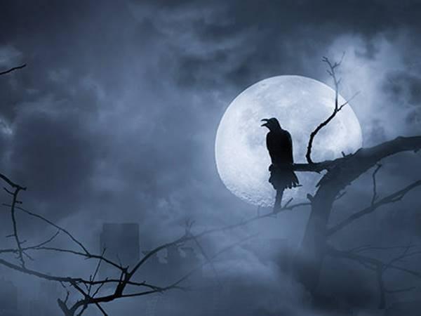 Mơ thấy quạ đen là điềm hên hay xui? Đánh con gì?